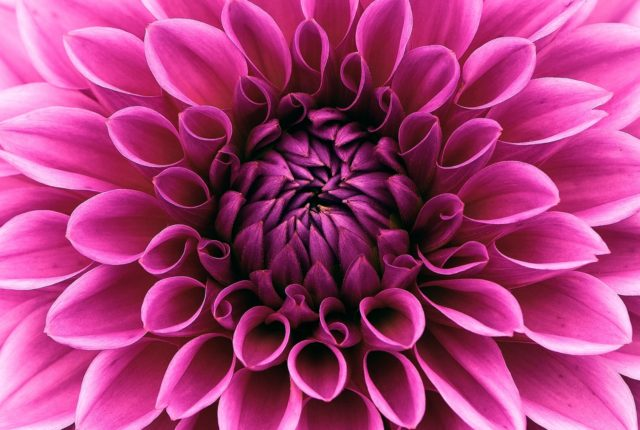 flor-quienes-somos