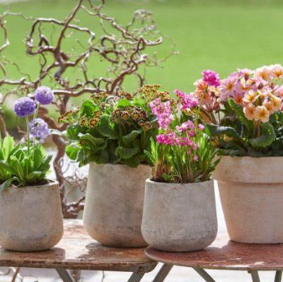 Flor y Plantas Mes Febrero