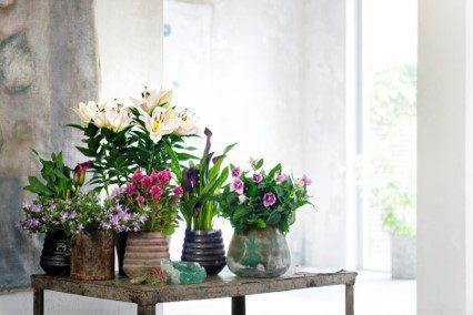 Plantas interior mayo