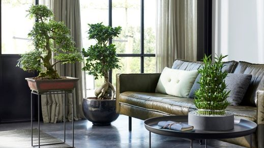plantas-zen-mayo