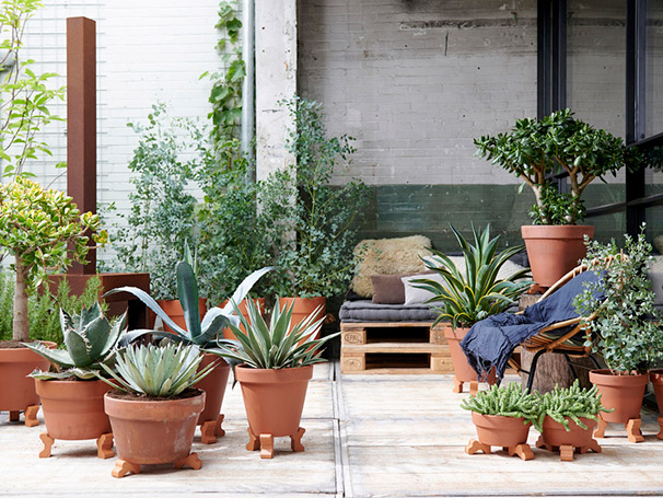 Plantas de exterior del mes